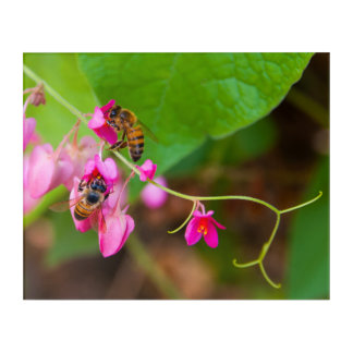 Bees On Coral Vine Flowers Photograph Acrylic Wall Art