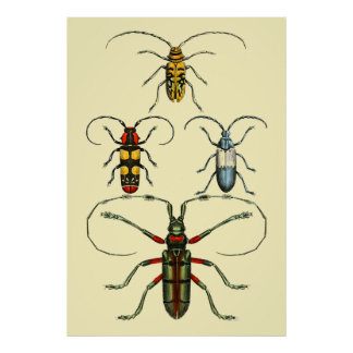 Beetle Insects Collection Poster