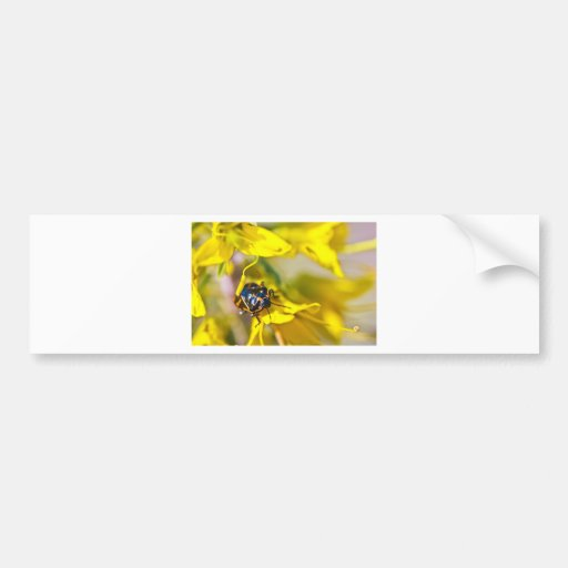 Beetle On Yellow Bumper Stickers