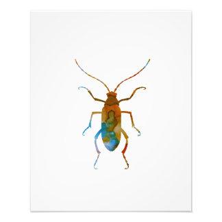 Beetle Photo Print