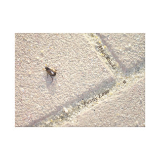 beetle reference abbey road penny lane stone walk canvas print