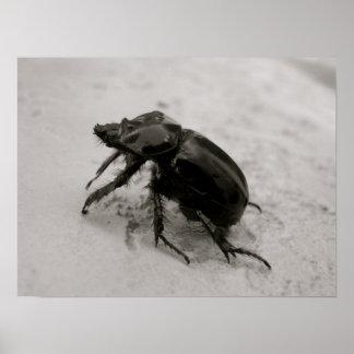 Beetle, Rhinoceros Poster