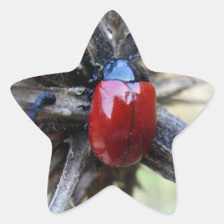 beetle star sticker