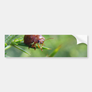 Beetle Waves Hello Bumper Sticker