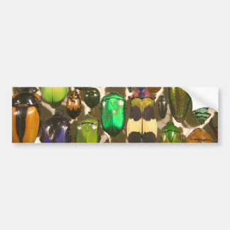 Beetles Bugs and Insects Bumper Stickers