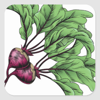 Beets vintage woodcut illustration square sticker