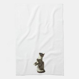 Begging Grey & White CAt Kitchen Towel