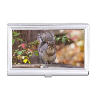 Begging Squirrel Business Card Case
