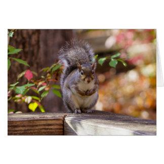 Begging Squirrel Card