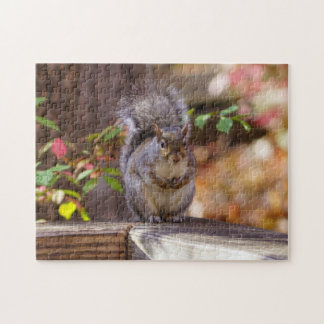 Begging Squirrel Jigsaw Puzzle
