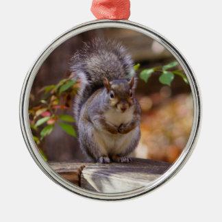 Begging Squirrel Metal Ornament
