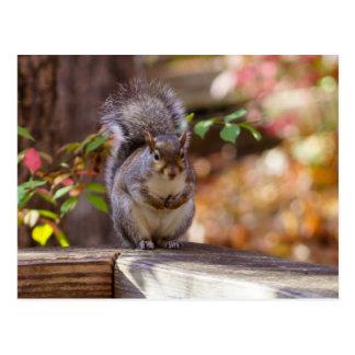 Begging Squirrel Postcard