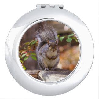 Begging Squirrel Travel Mirror