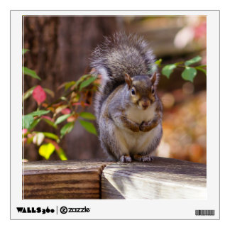 Begging Squirrel Wall Decal