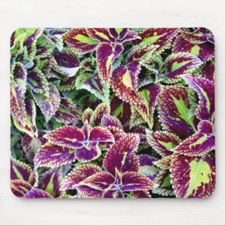 Begonia Leaves Mouse Pad