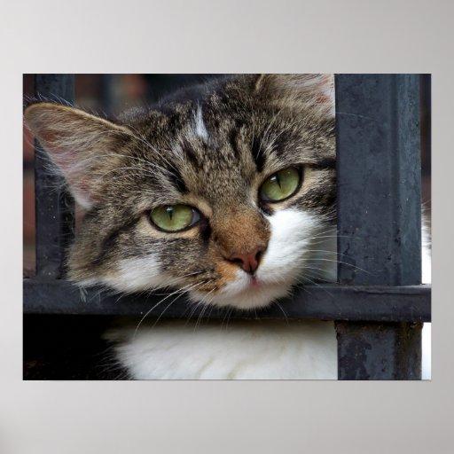 Behind Bars (Cat) Fine Art Print