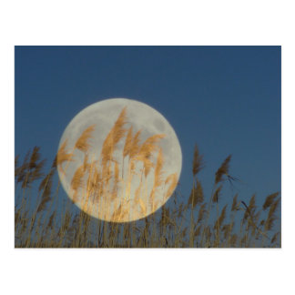 Behind - full moon behind grass collage postcard