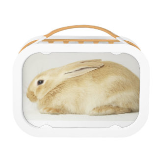 Beige bunny rabbit on white background 4 lunchboxes