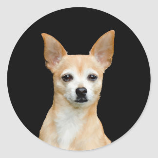 Beige painted chihuahua on black background classic round sticker