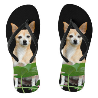 Beige painted chihuahua on black background flip flops
