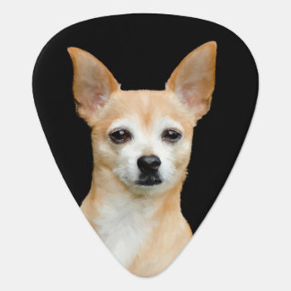 Beige painted chihuahua on black background guitar pick