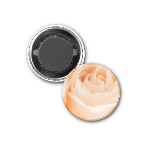 Beige rose refrigerator magnets