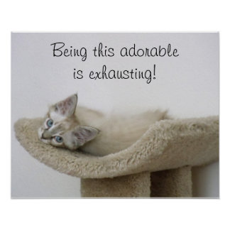 Being this adorable is exhausting kitty poster