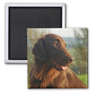 Bel aimant de photo de chien enduit plat de chien
