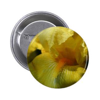 Bel iris jaune badges
