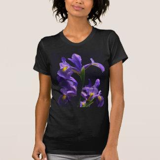 Bel iris pourpre, sur un T-shirt noir