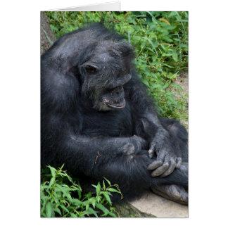 belated birthday-pouting chimpanzee card