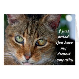 Belated cat sympathy card