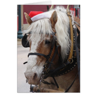 Belgian Draft Horse Christmas Greeting Card