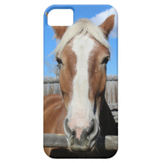 Belgian Draft Horse iPhone 5 Covers