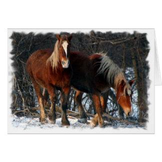 Belgian Draft Horses Greeting Card