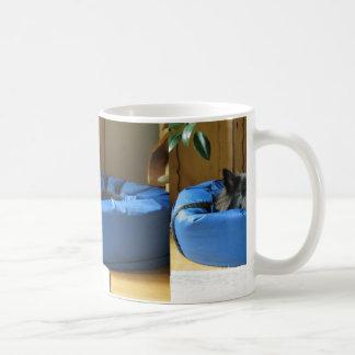 Belgian Groenendael in bed Coffee Mug