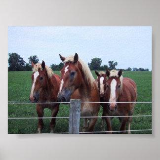 Belgian Horses Poster