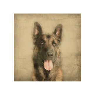 Belgian Malinois - Belgian shepherd -Maligator Wood Print