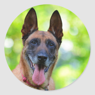 Belgian Malinois dog lovers photo round stickers