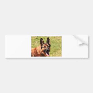 Belgian Malinois German Shepherd Bumper Sticker