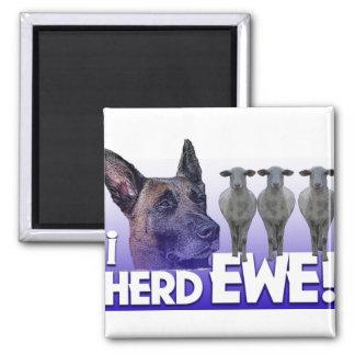 Belgian Malinois  -I Herd EWE - PUN - I HEARD YOU Square Magnet