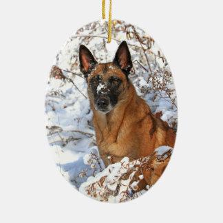 Belgian Malinois in snow ornament