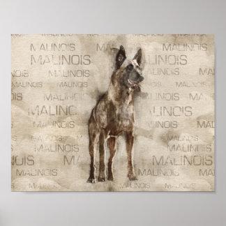 Belgian Malinois - Mechelaar  - Maligator Poster