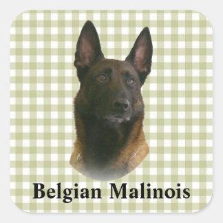belgian malinois square sticker