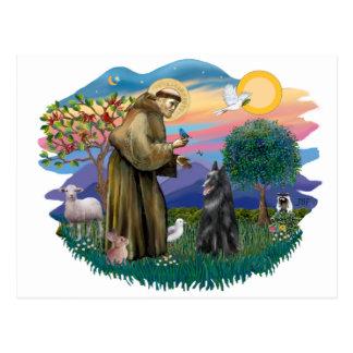 Belgian Sheepdog Postcard