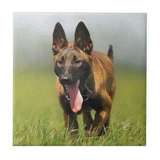 Belgian Shepherd Dog Tile