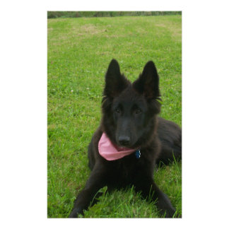 Belgian Shepherd Groenendael Puppy Customized Stationery