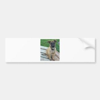 Belgian Shepherd Malinois Dog Bumper Sticker