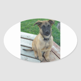 Belgian Shepherd Malinois Dog Oval Sticker