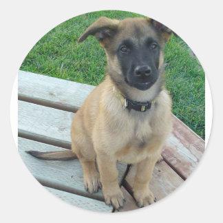 Belgian Shepherd Malinois Dog Round Sticker